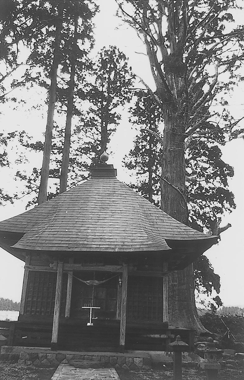 石動神社の親スギ