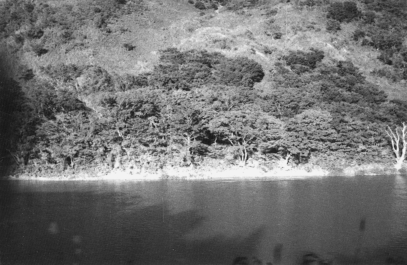 むこう岸の樹木と川