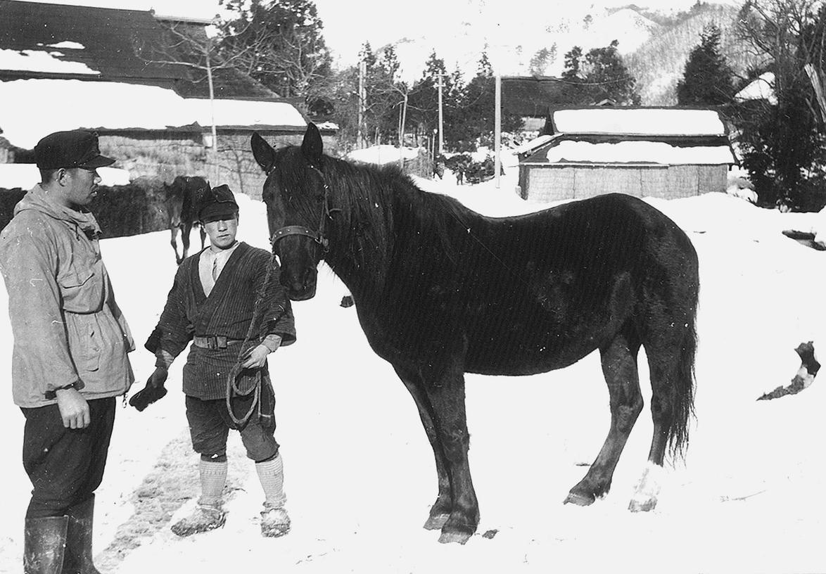 馬と飼い主