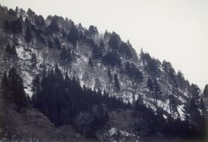 古口峡谷のスギ・ブナ混交林
