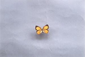 チョウセンアカシジミ(♀)