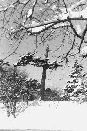 最上公園冬景色