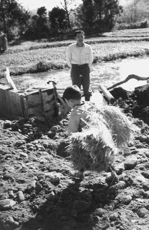 稲を背負う子供
