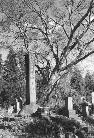 樹木と石碑
