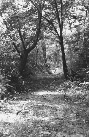 旧猿羽根道路
