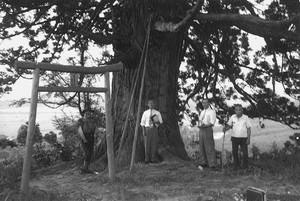 鳥居と大木(轟楯の跡)