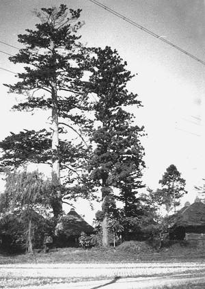 戸沢家御廟所と樅の木