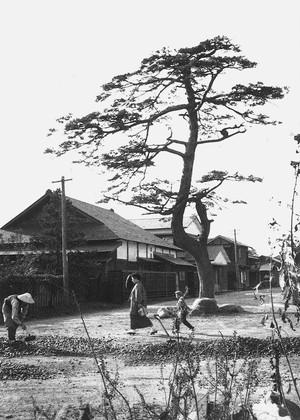 常盤町別邸跡(松の木)