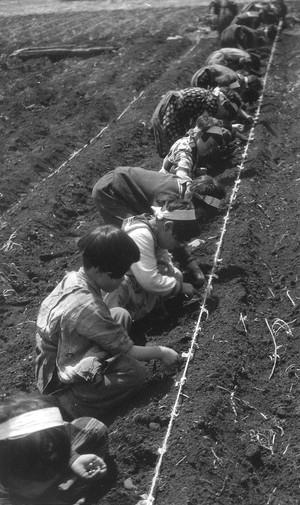 戦時下 学童の食糧増産