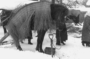 防寒にミノゲを着た馬