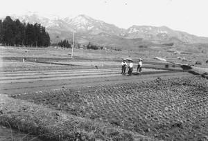 山の遠景と田んぼ