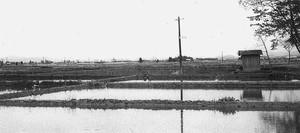 水をはった田んぼ