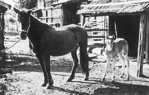 農家における馬の飼育(最上町地方)