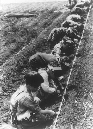 校庭も豆畑――豆をまく学童(昭和18年ころ)