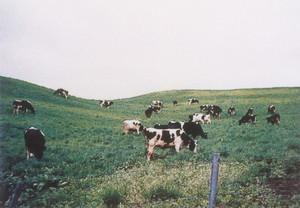 最上中部牧場