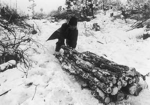冬の木出し(萩野)
