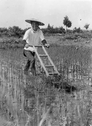 除草器かけ (昭和30年ころ)