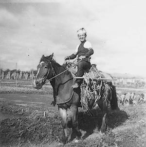荷鞍馬(昭和25年秋の取り入れのころ)