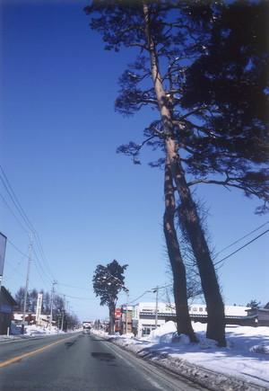 泉田往還の並木(平成14年)