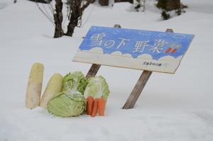 雪の下野菜