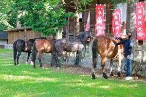 神輿渡御の馬