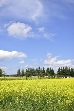 エコロジーガーデンの菜の花畑