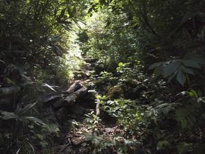 杢蔵山登山道
