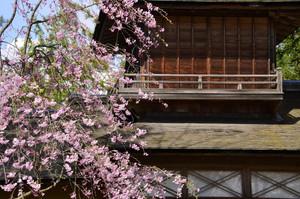 桜と藤嵐閣