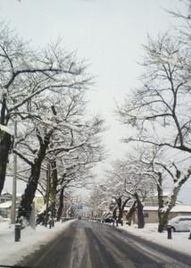 泉田桜通り