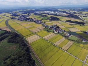 角沢(農林大学校から)